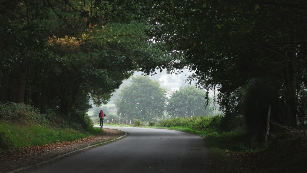 person walking towards trees