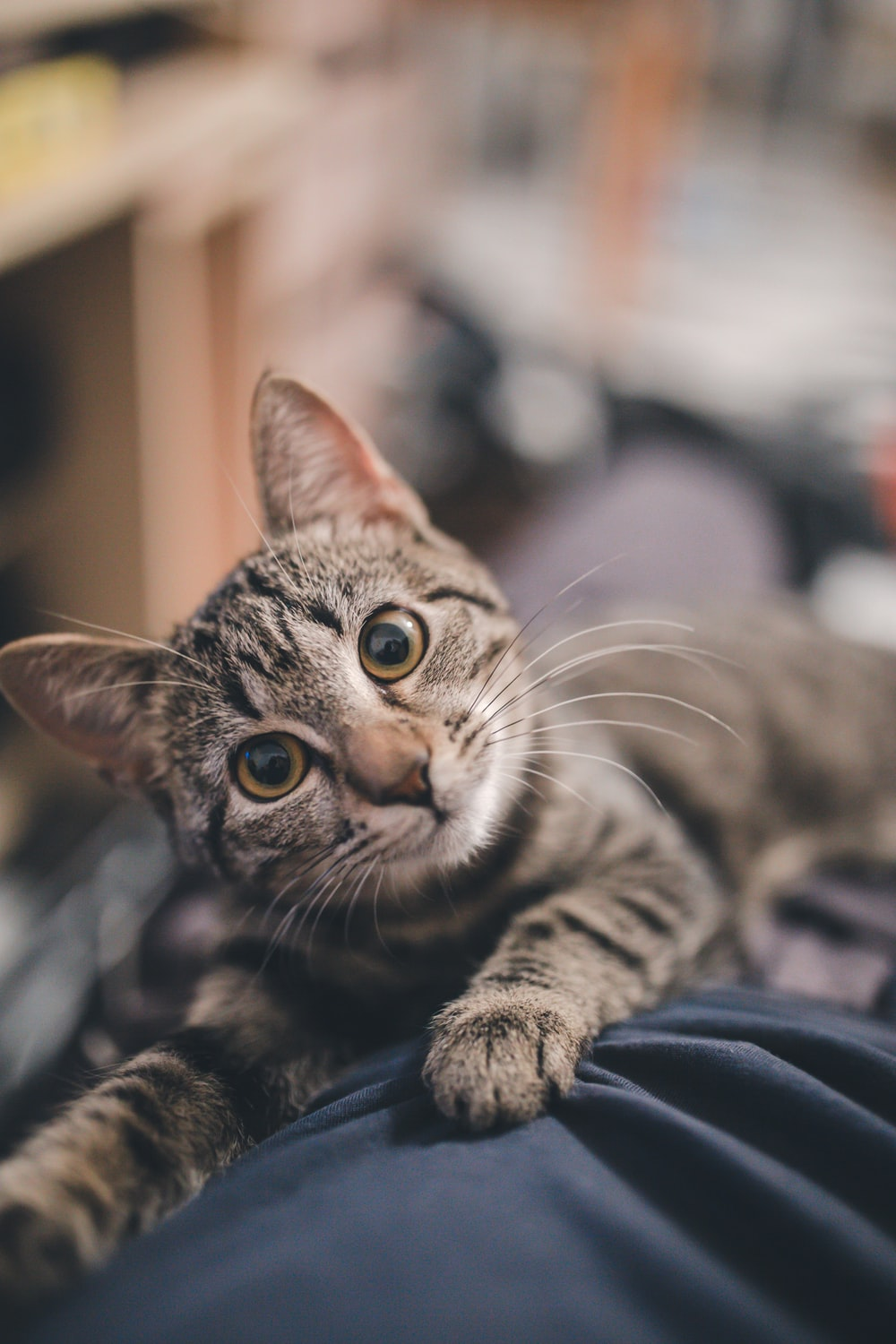 Cat Wallpapers Free Hd Download 500 Hq Unsplash