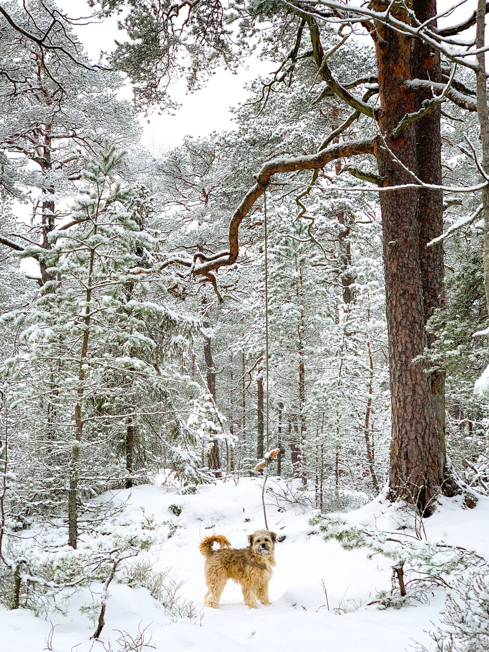 brown dog standing near trees