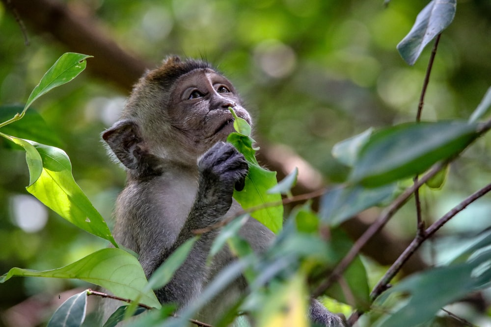 brown monkey on tree