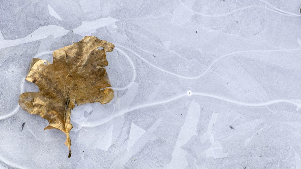 dried leaf on gray surface