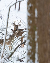 selective focus photography of deers on snow covered field