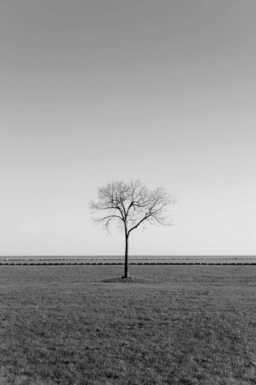 bare tree under gray sky