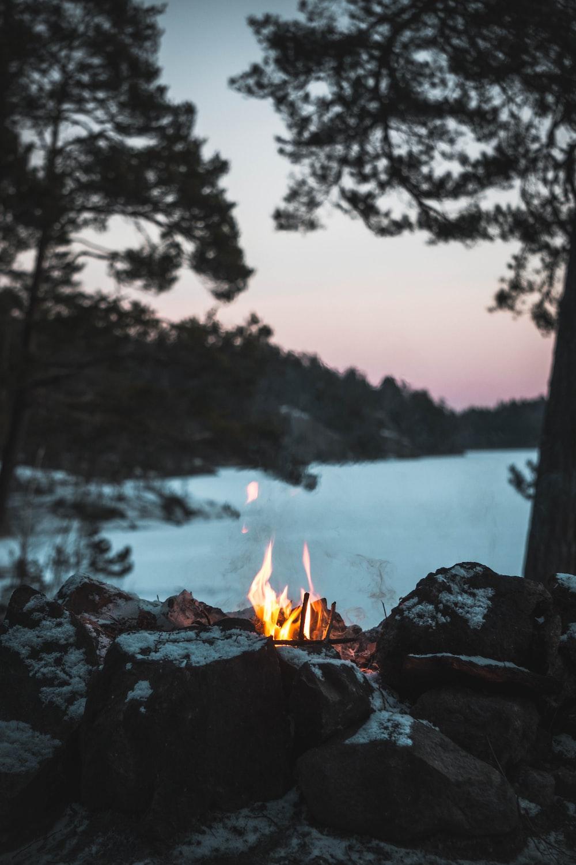 bornfire near tree