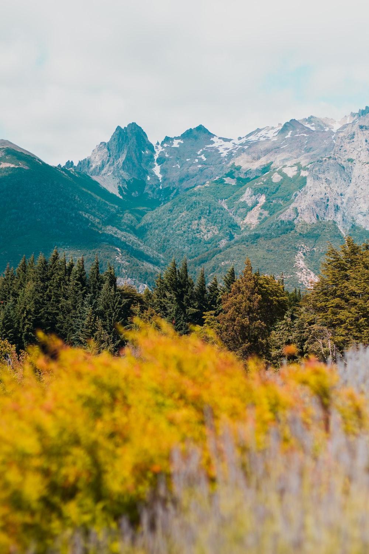 pine trees near mountain under white sky