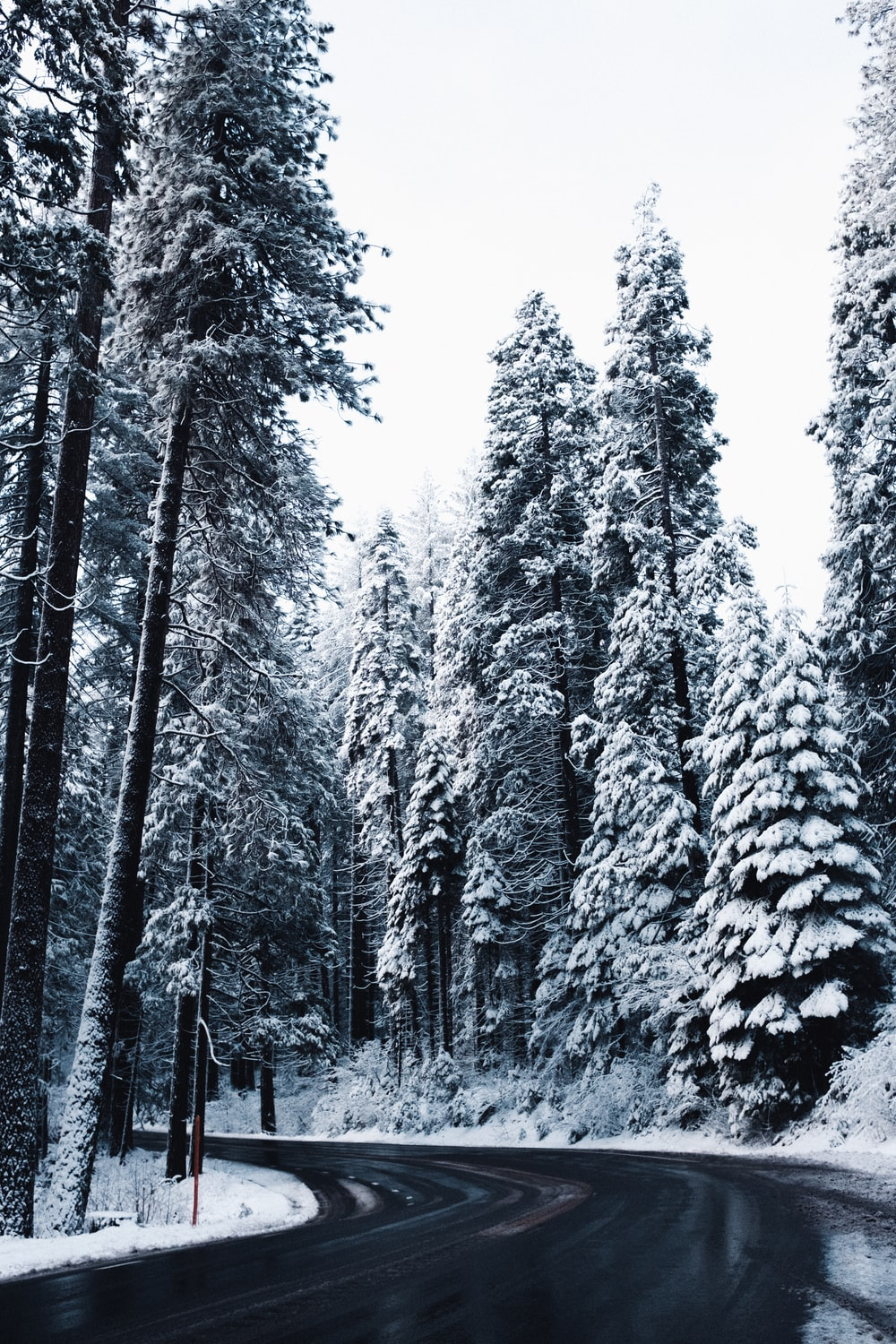 snow covered trees under white sky