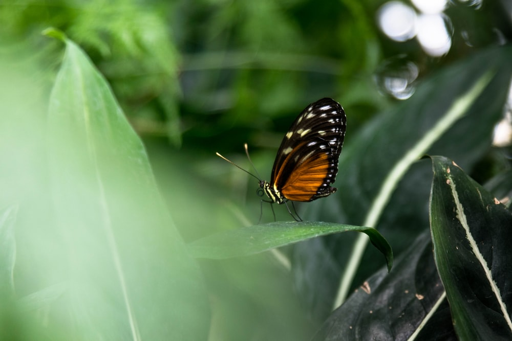 selective focus photography of black-and-brown butterfly perched on green-leafed plant
