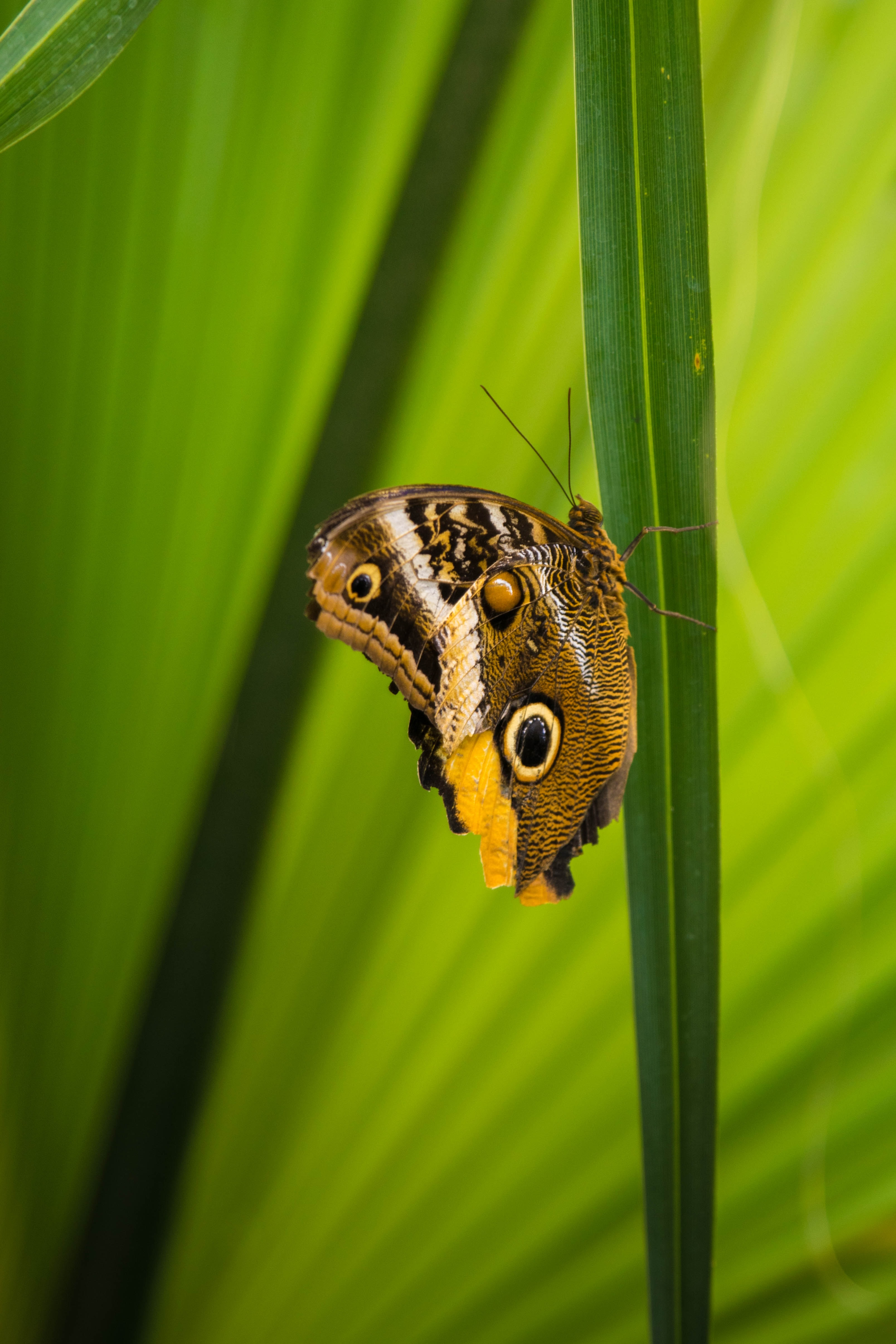 brown and black butterfly perching on green leaf