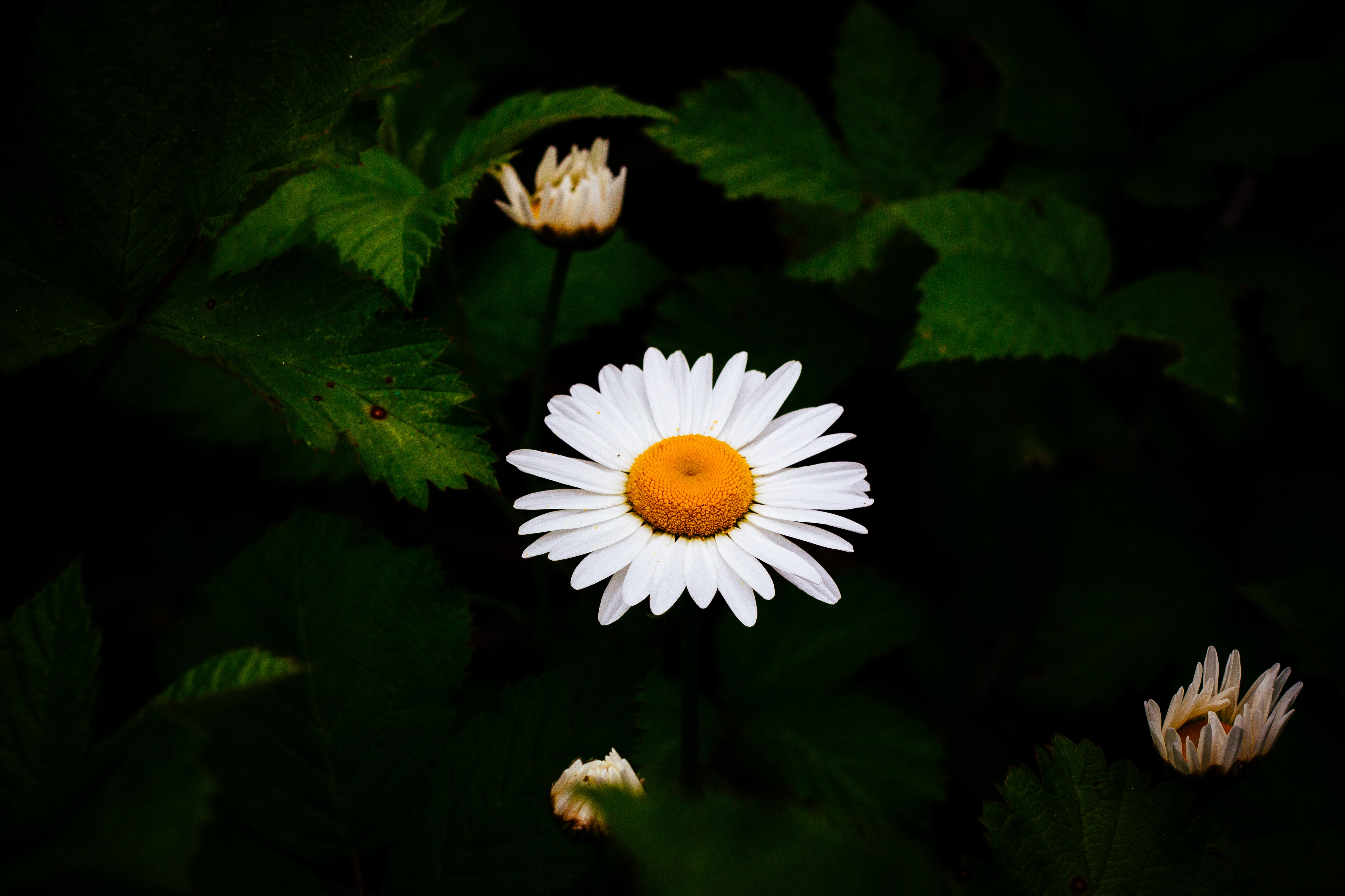 bokeh photography of white and yellow flower