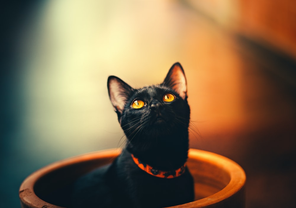 black cat in brown pot