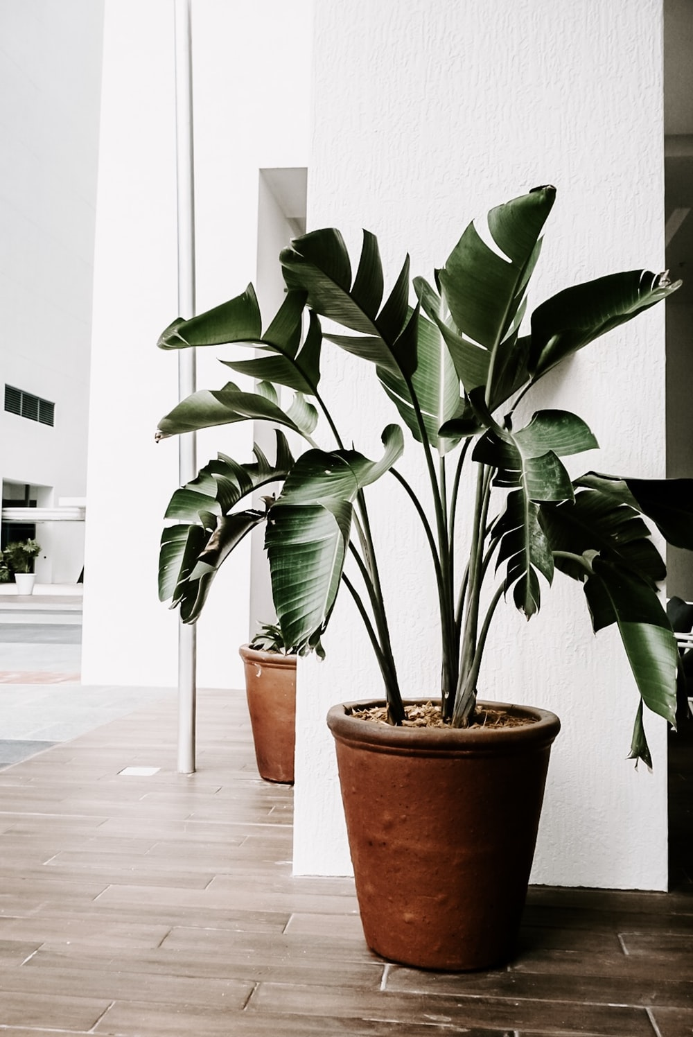 green-leafed plant in planter inside room