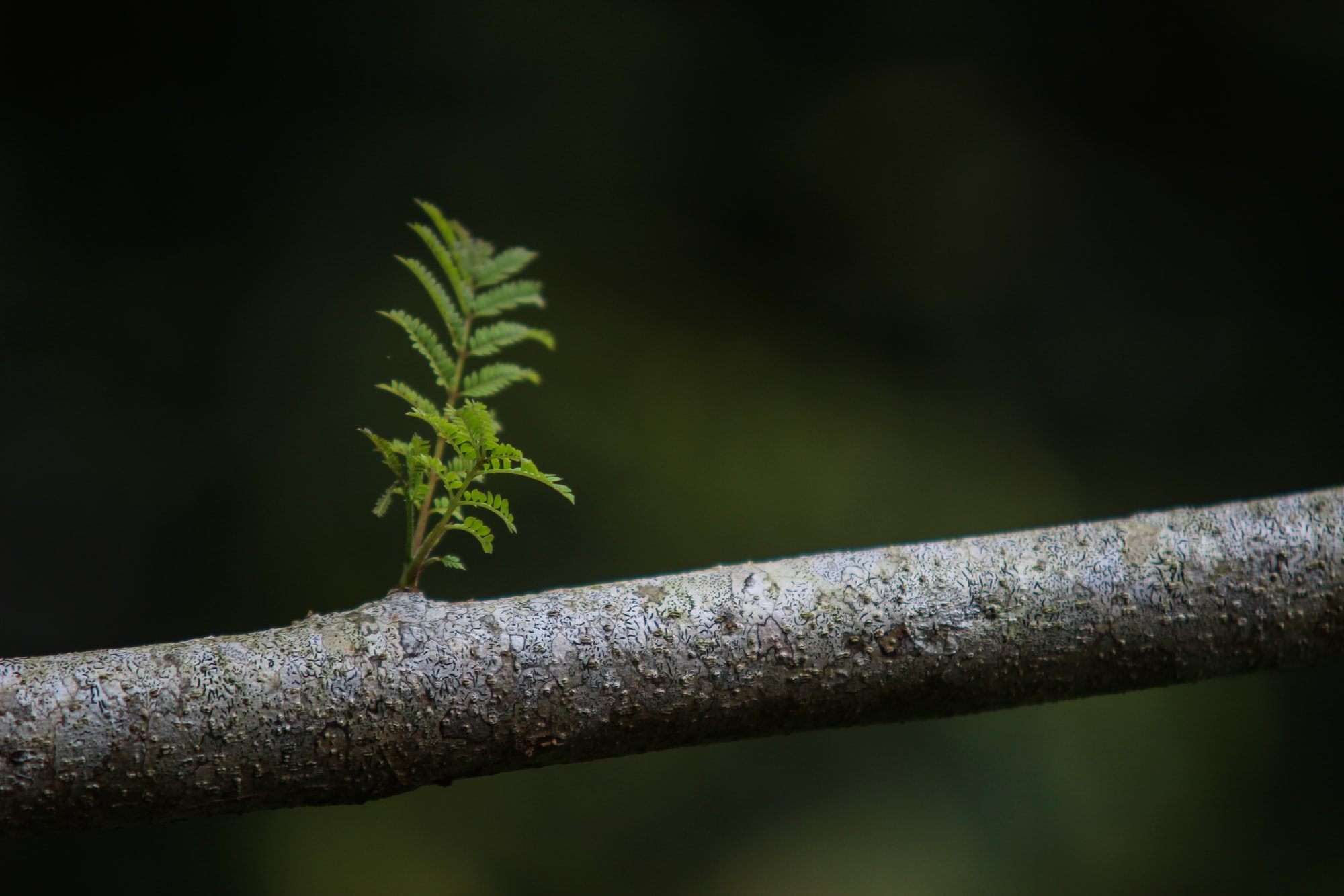 Living Centered: Growth