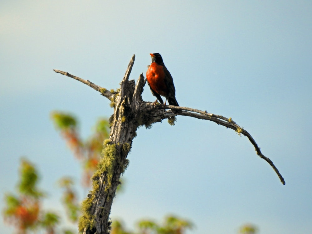 brown and black bird standing on bare tree