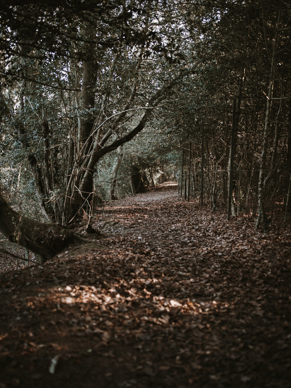 pathway underneath trees with dried leaves