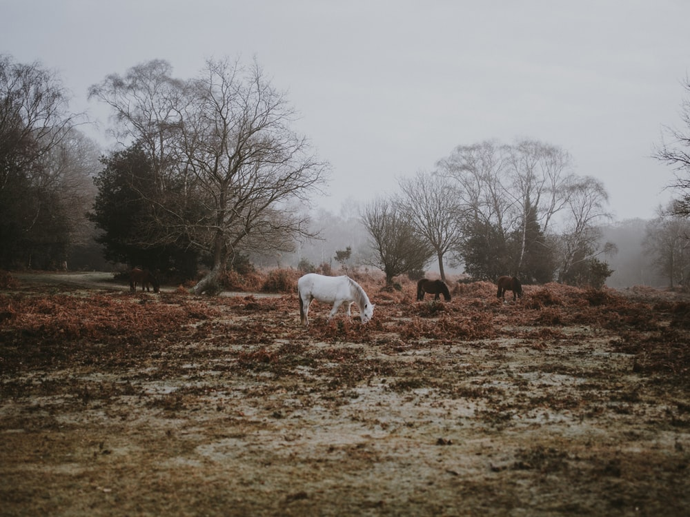 white and brown horses near trees during daytime