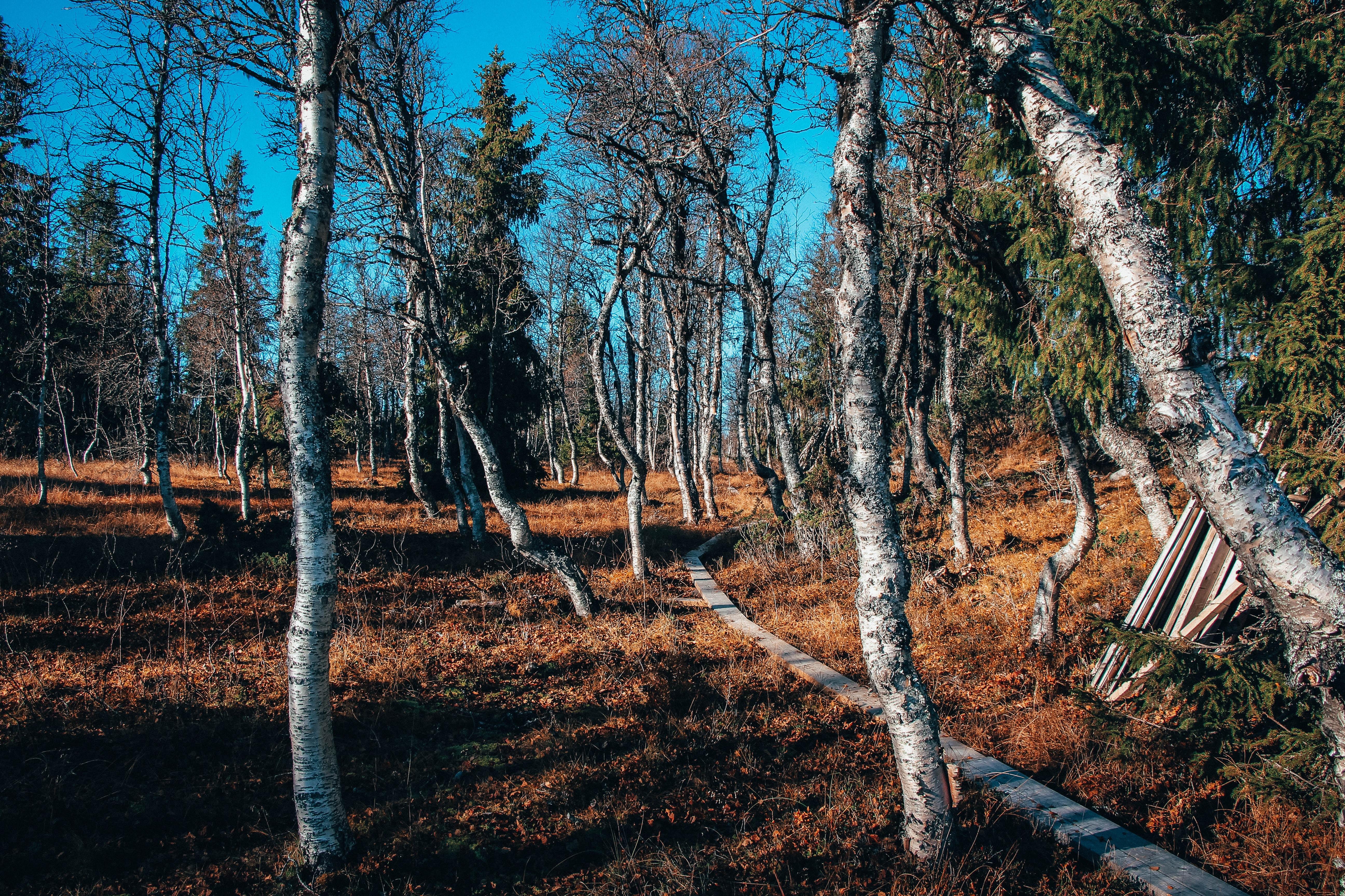 pathway beside trees
