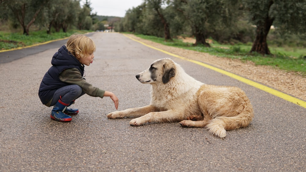 child crouching in front of lying dog on road during daytime