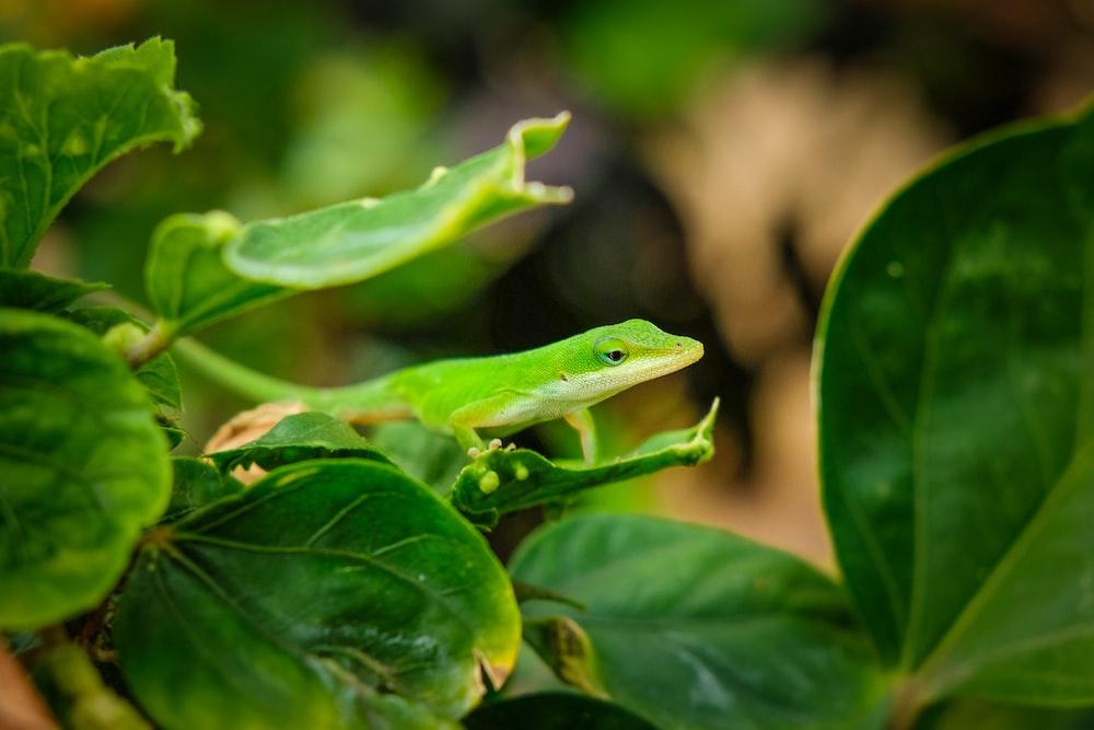 closeup photo of green lizard