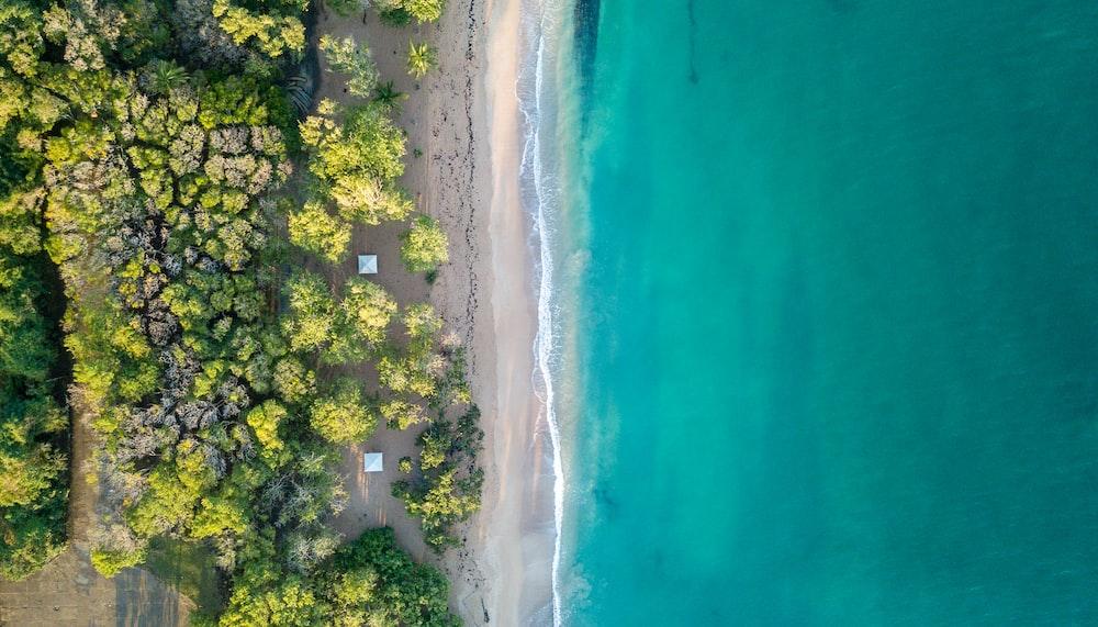 aerial view of trees near ocean