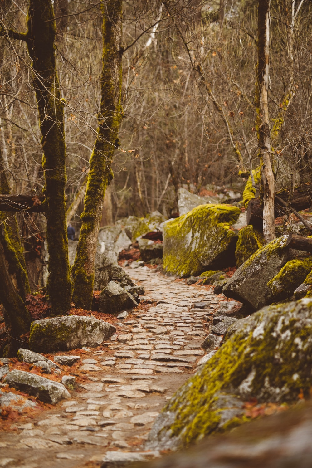 moss covered stones and trees