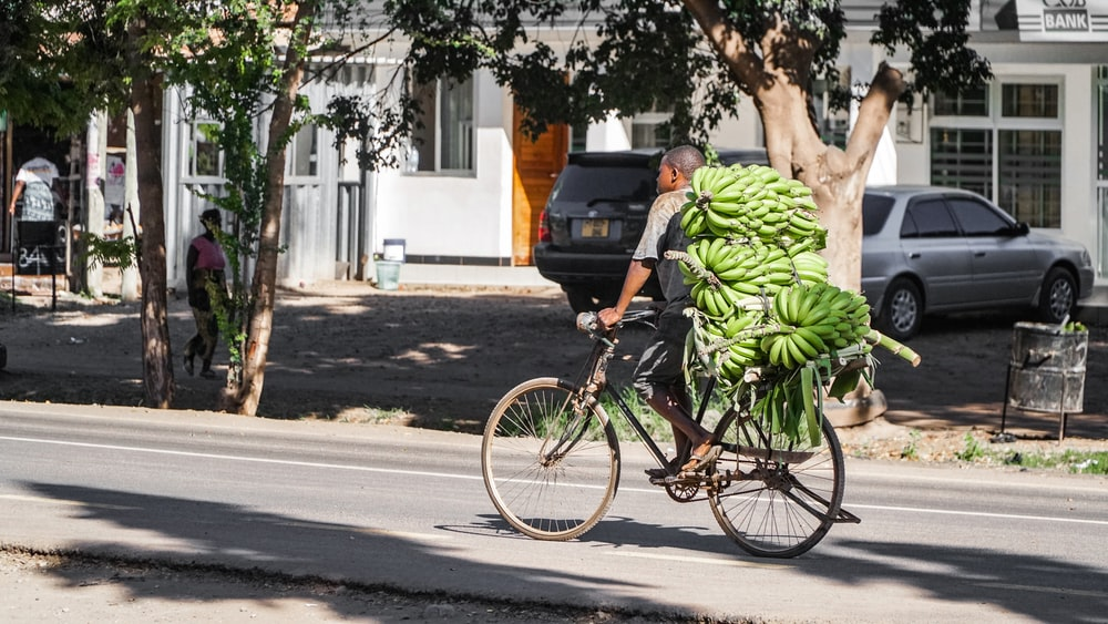 man riding bicycle while carrying bunch of bananas