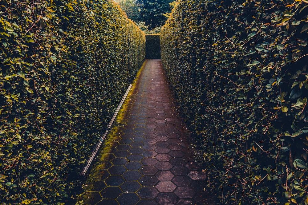 maze garden during daytime