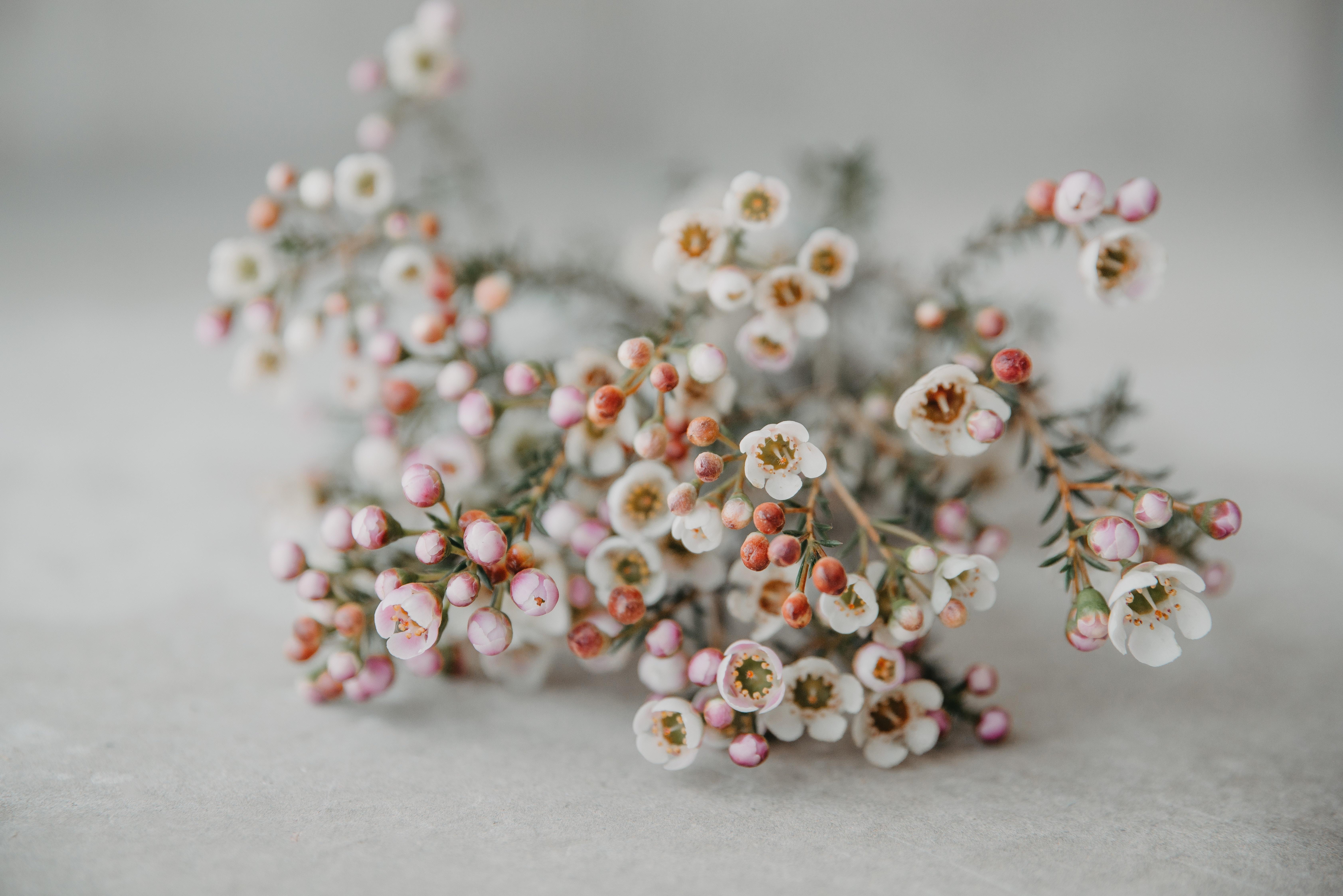white petaled flower decor