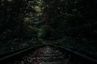 railroad on forest on focus photography