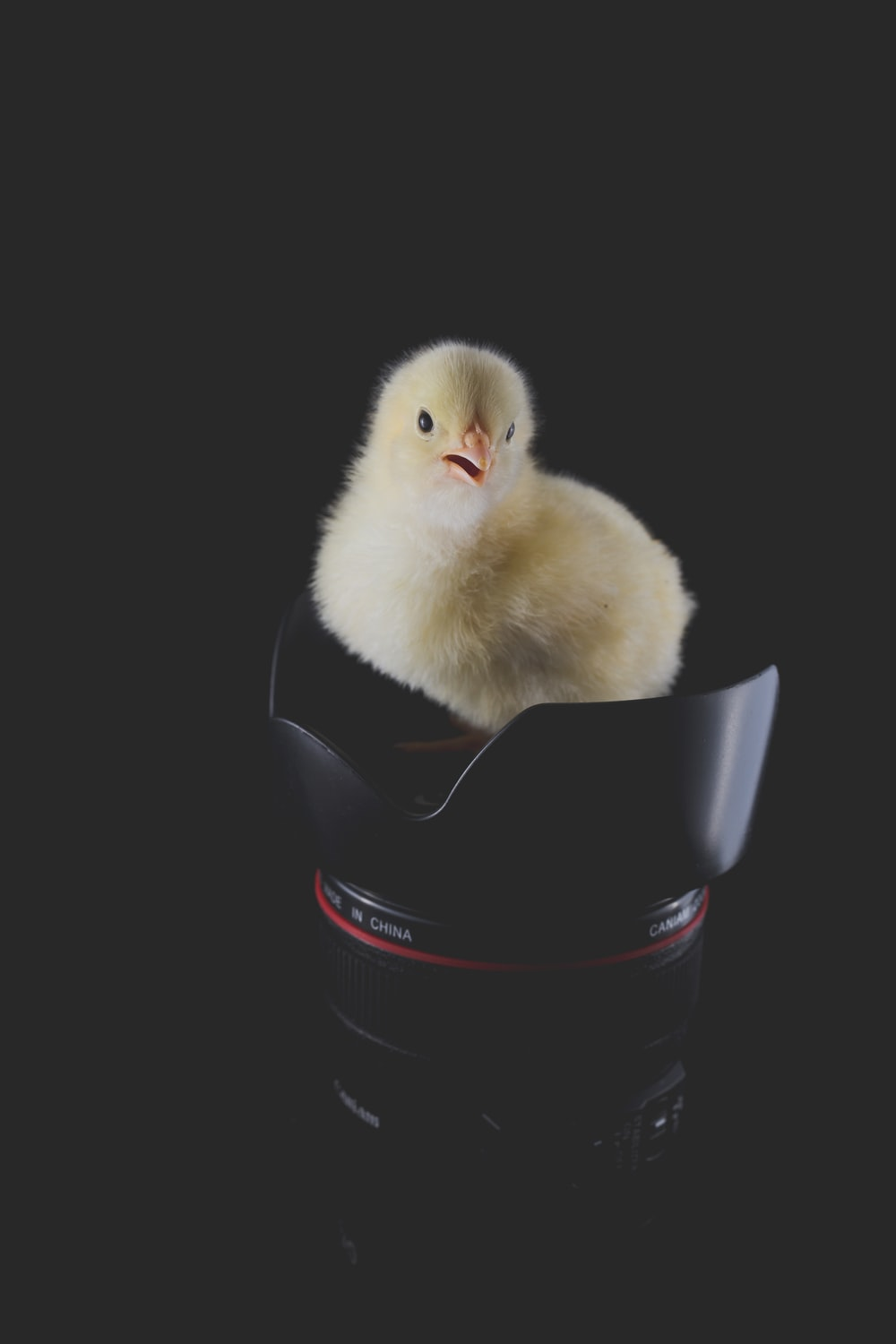 chick on telephoto lens