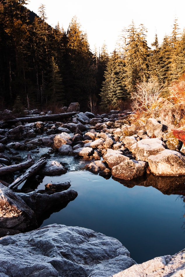 Pine forest with stream and rocks