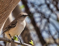 tilt shift focus photography of gray bird perched on tree during daytime