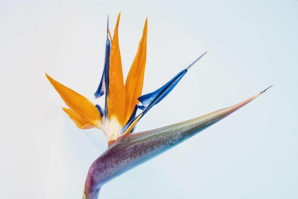 Birds of paradise on focus photo