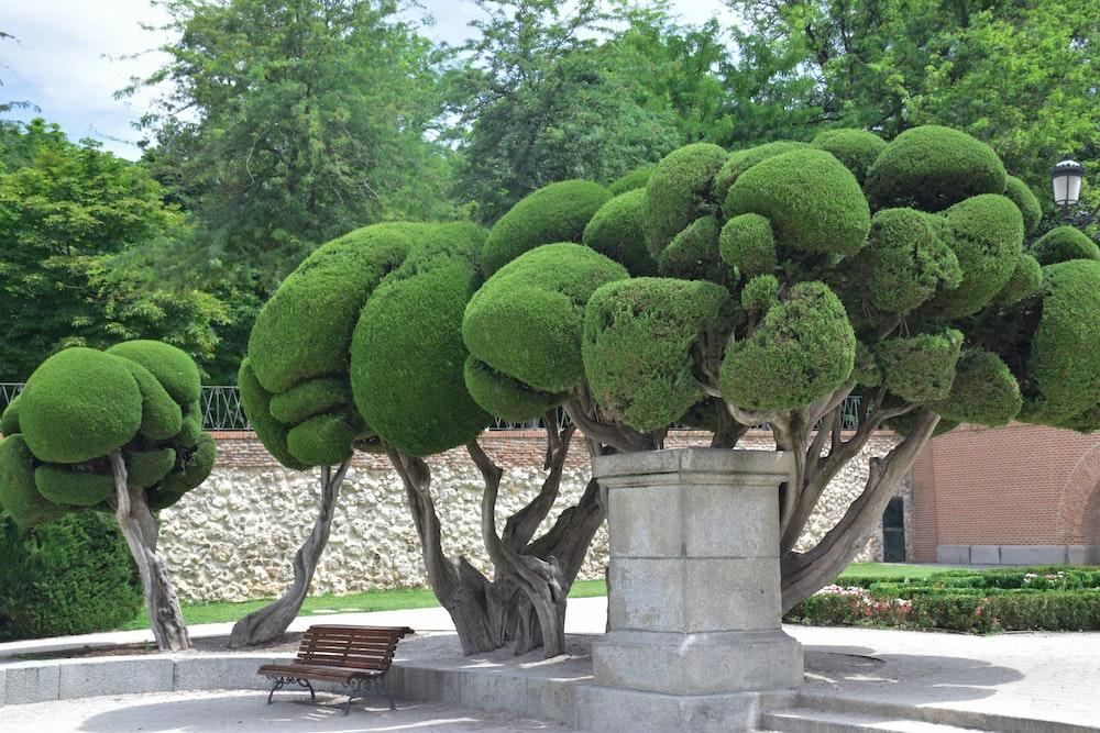 green trees near bench