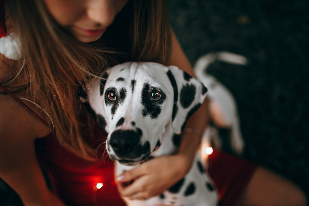 selective focus photography of white and black dog