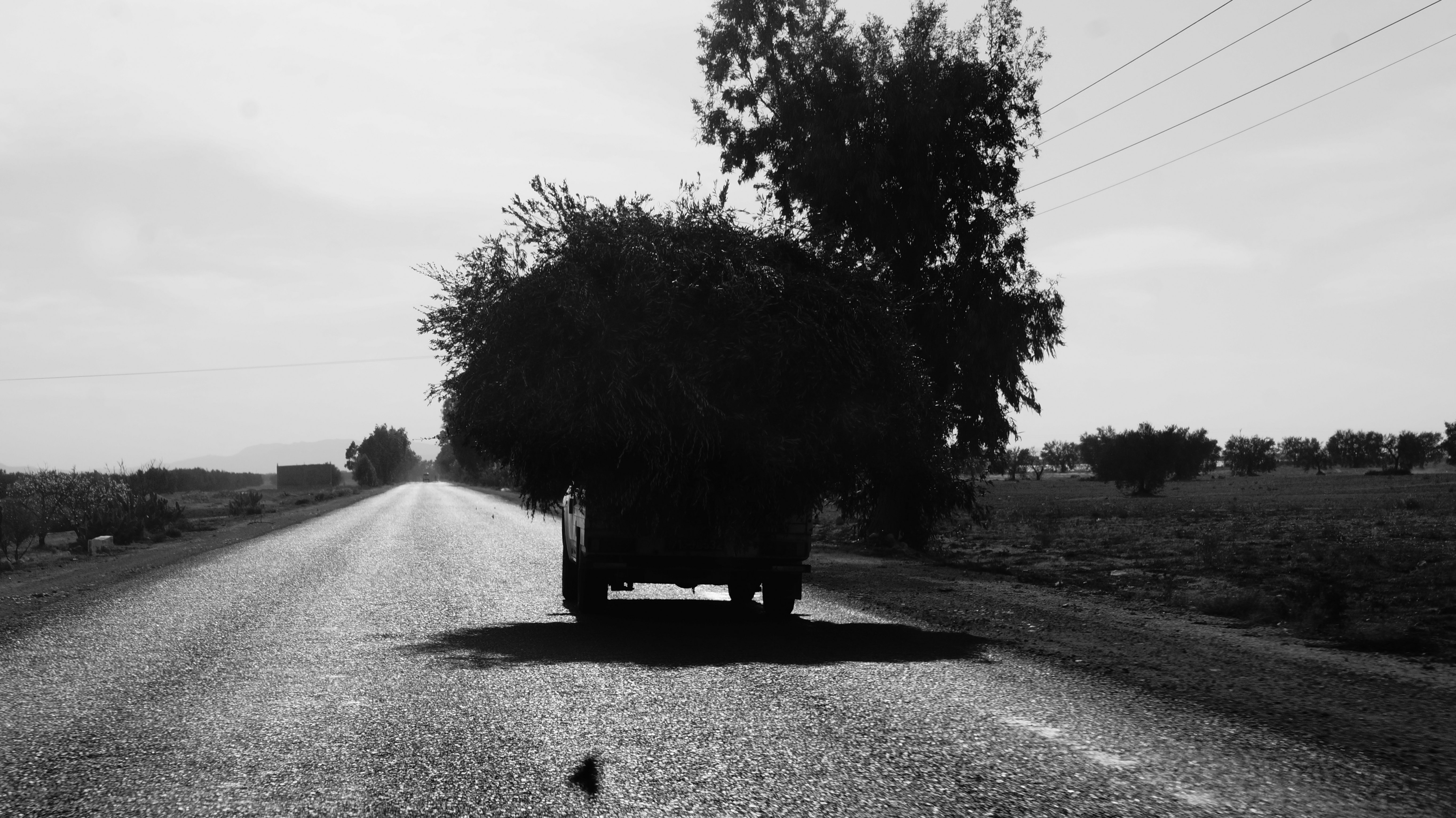 grayscale photography of vehicle carrying plant on road