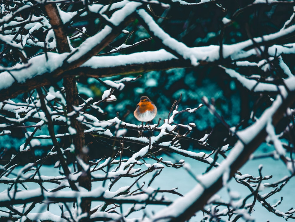 selective focus photography of orange and white bird perching on bare tree