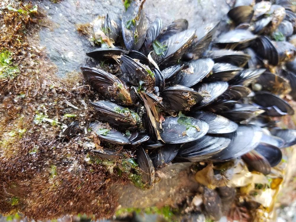 black shell