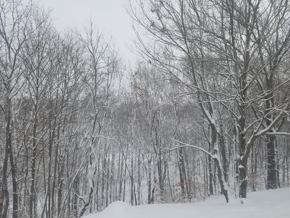 bare trees with snow covered field