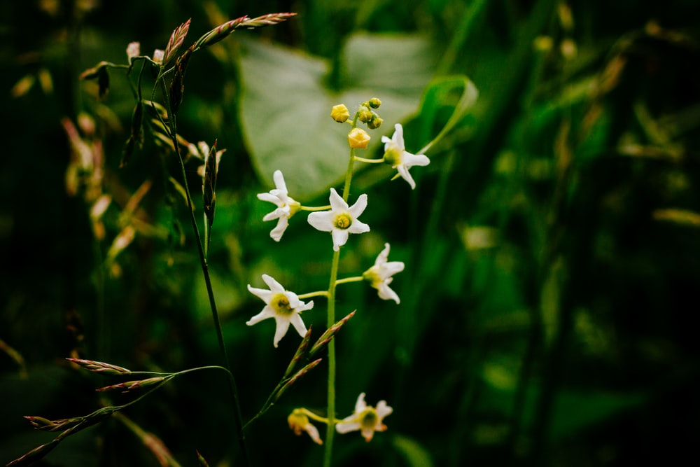 selective focus photo of white-petaled flower