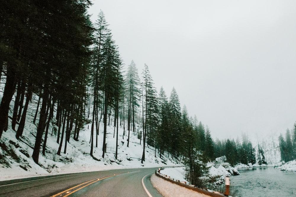 green trees near road