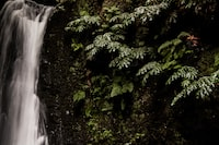 waterfalls surrounded by tree