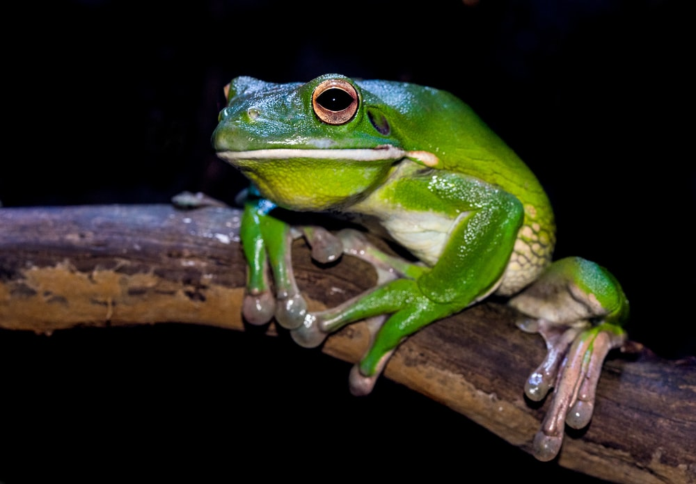 green frog on branch