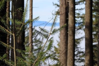 fern plants in forest