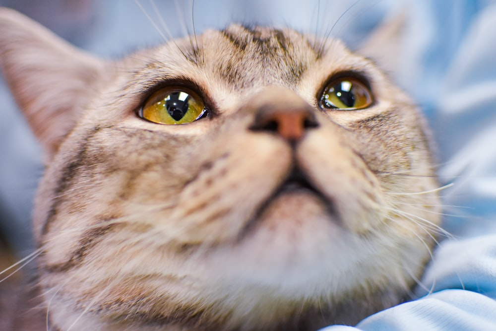 low angle photo of silver tabby cat