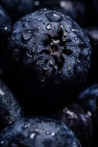 grapevines- grape stories