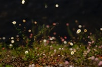 photo of white daisy flowers