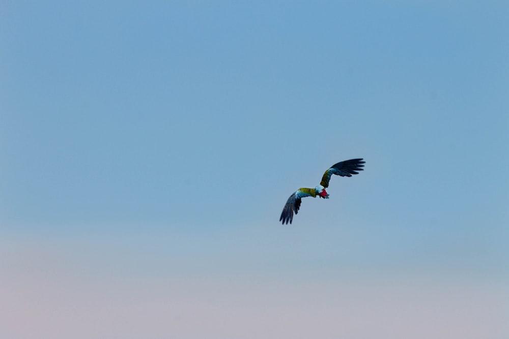 focus photography of black bird on sky