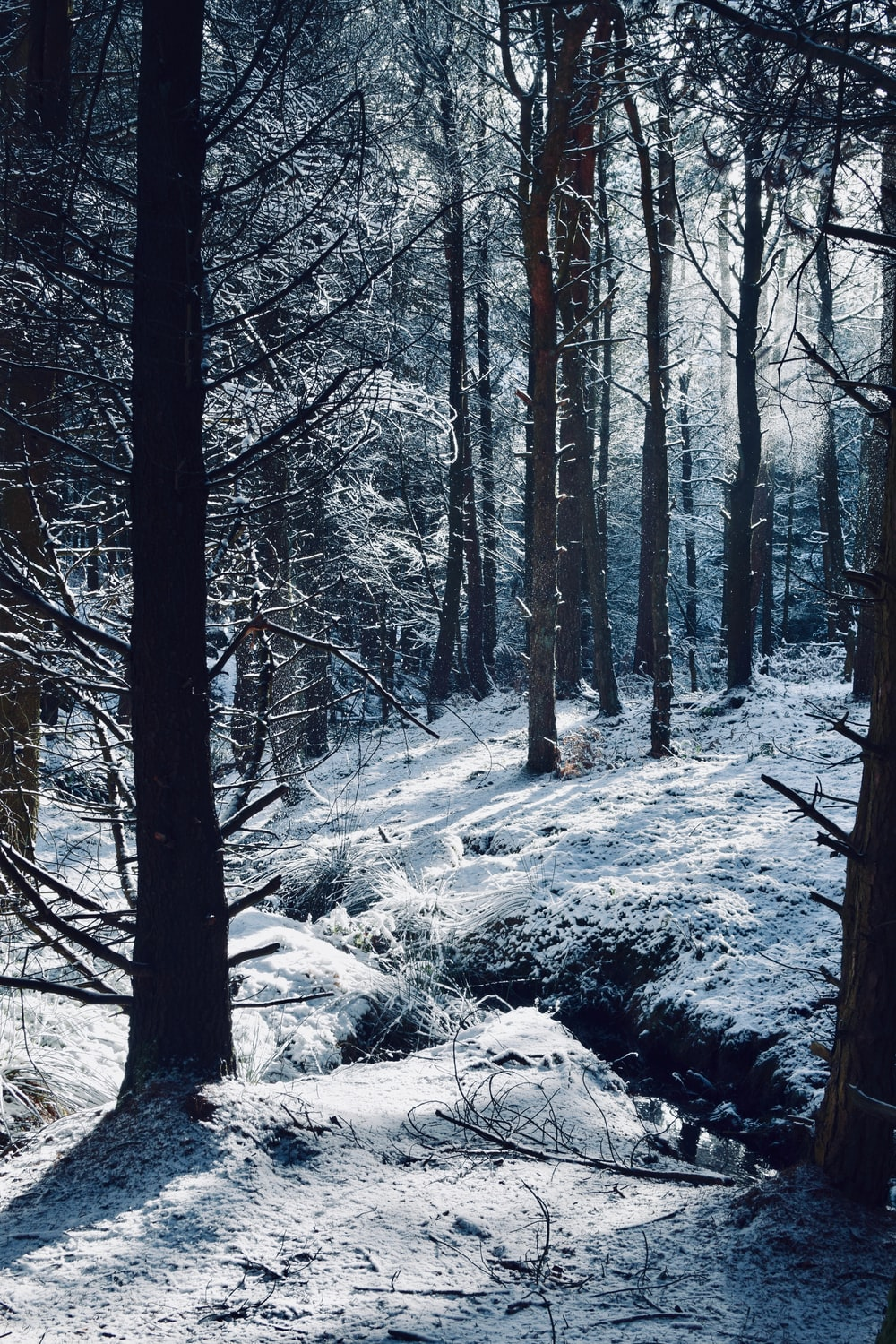forest covered snow