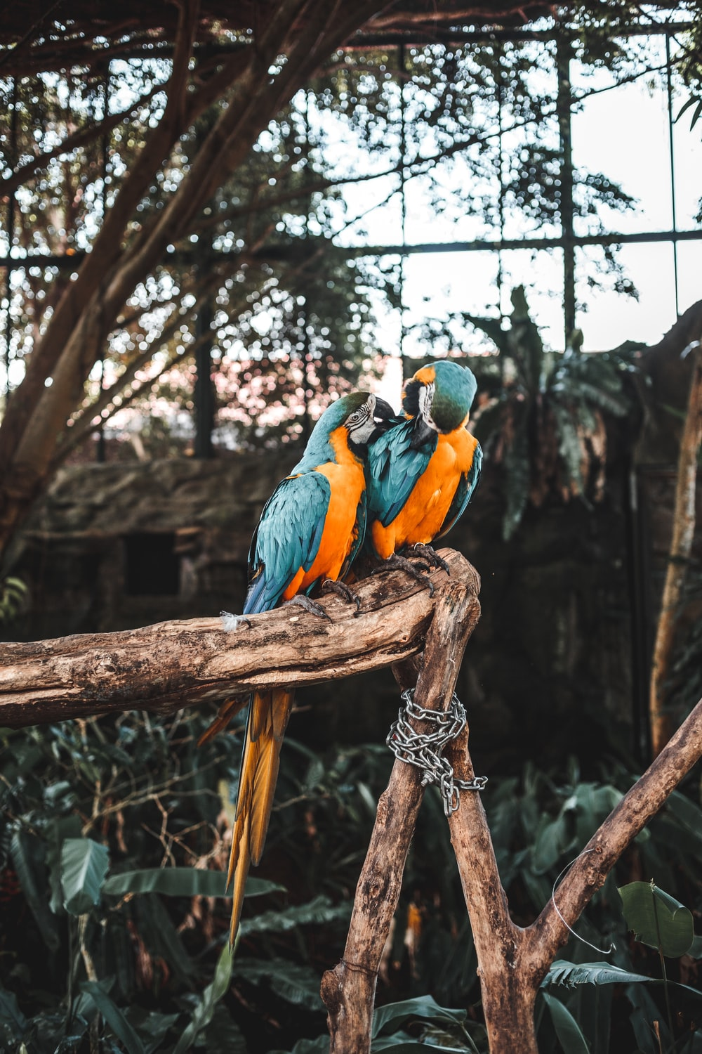 two macaw on tree
