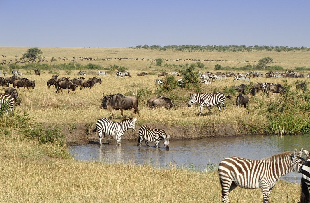 Masai Mara | Best Travel Destinations Perfect For Soul Searching